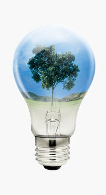 Tree in a Lightbulb